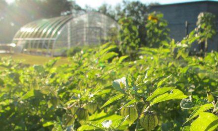 La Industria Farmacéutica como pieza clave del desarrollo sustentable