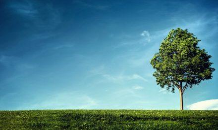 Programa de Reducción de Emisiones a la Atmósfera (PRECA)