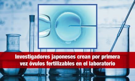Investigadores japoneses crean por primera vez óvulos fertilizables en el laboratorio