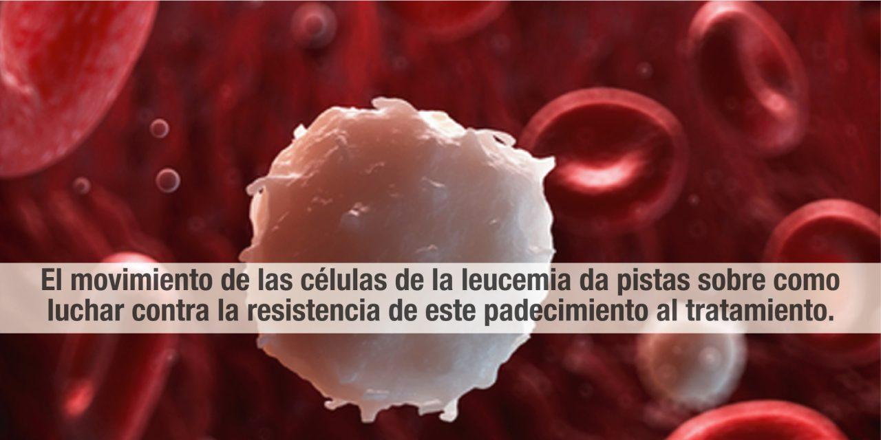El movimiento de las células de la leucemia da pistas sobre como luchar contra la resistencia de este padecimiento al tratamiento.