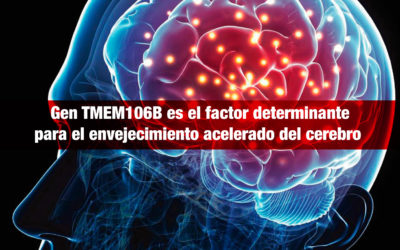 Investigadores norteamericanos identifican al gen TMEM106B, como factor determinante para el envejecimiento acelerado del cerebro y el desarrollo de enfermedades neurodegenerativas