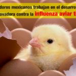 Investigadores mexicanos trabajan en el desarrollo de una vacuna innovadora contra la influenza aviar tipo H7N3