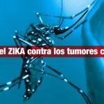 El virus del ZIKA contra los tumores cerebrales