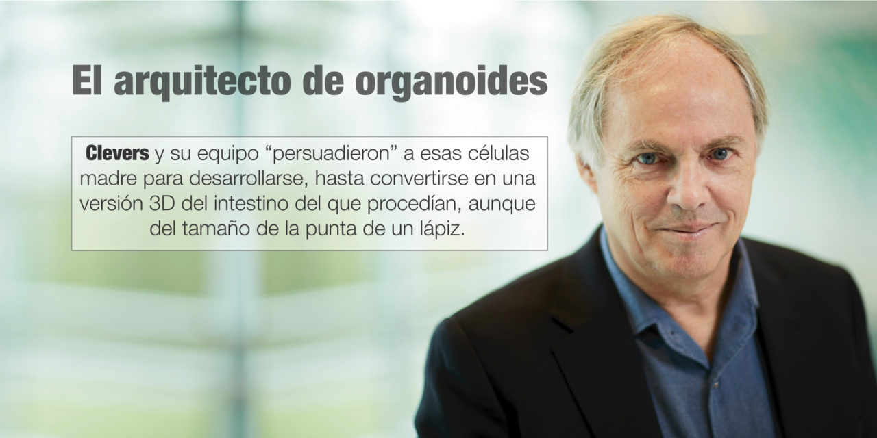 El arquitecto de organoides