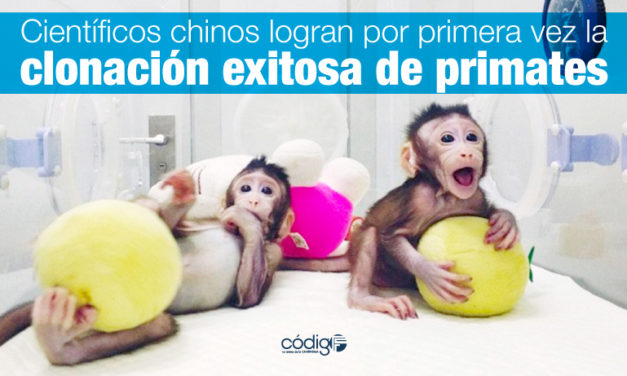 Científicos chinos logran por primera vez la clonación exitosa de primates