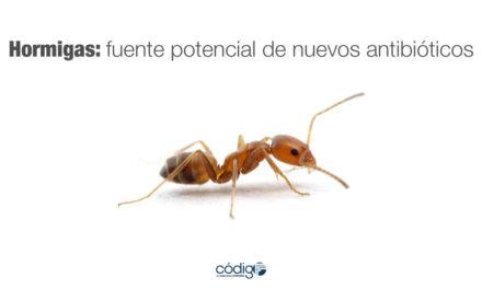 Hormigas: fuente potencial de nuevos antibióticos
